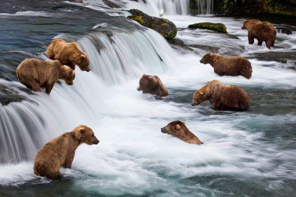 Alaska băng giá tiềm ẩn vẻ đẹp hoang dã