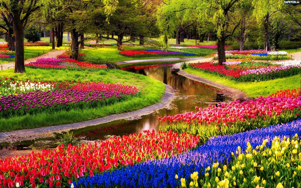 muôn hoa khoe sắc trong công viên ở Ámterdam