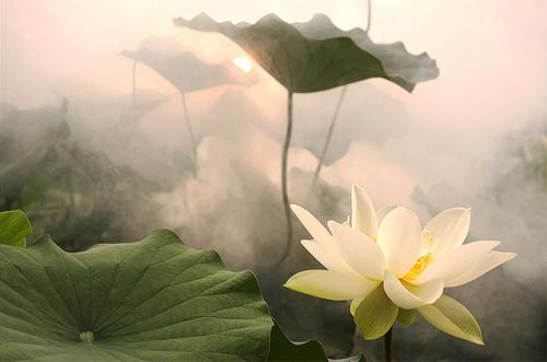 http://www.dulichvietnam.com.vn/data/Aosen.jpg