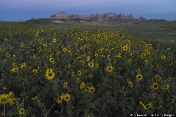 Mùa hoa nở ở Badlands - Mỹ