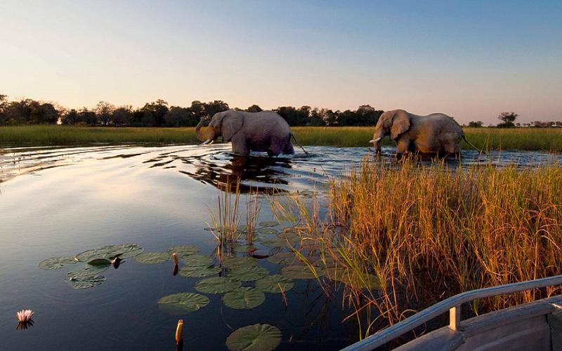 Botswana dỡ bỏ lệnh cấm du khách săn voi