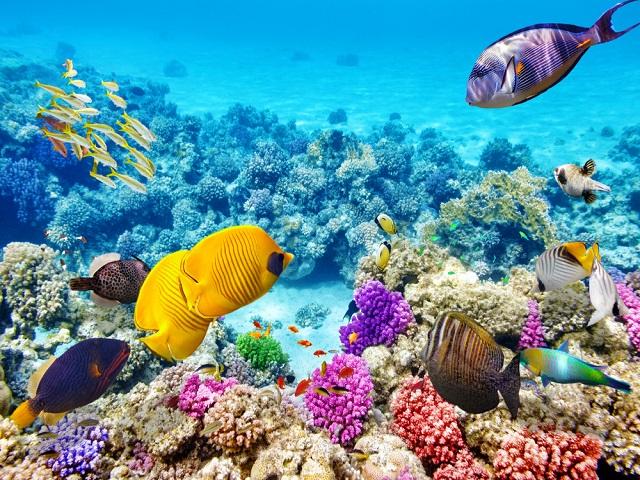 Rạn san hô Great Barrier rực rỡ sắc màu