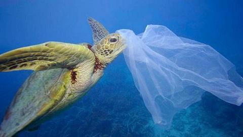 túi ni lông trôi ra biển côn đảo làm hại sinh vật biển