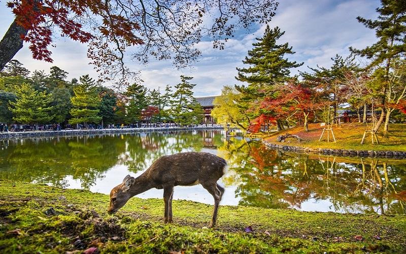 Du lịch Nhật Bản tăng trưởng ấn tượng trong tháng 1/2019