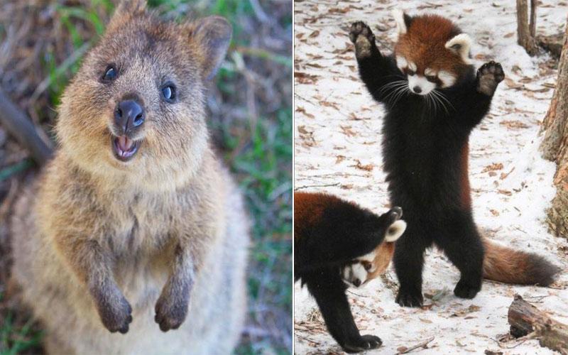 Bạn có muốn được selfie với 7 sinh vật đáng yêu nhất thế giới này?