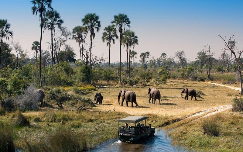 Du khách phản đối dỡ lệnh cấm săn voi tại Botswana