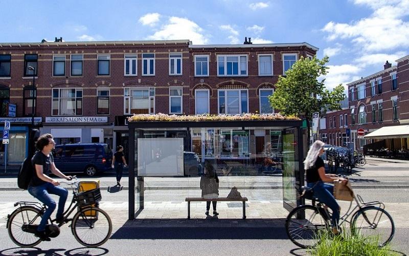 Hà Lan biến các trạm dừng xe buýt thành thiên đường trú ẩn của ong