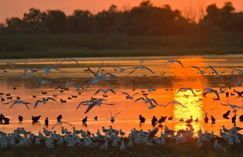 Các điểm đến châu Âu dành cho hội những người thích ngắm chim quý hiếm