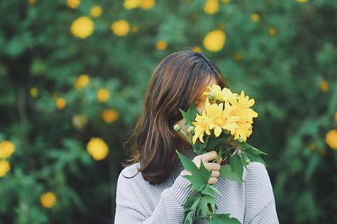 Mê mải những thiên đường săn hoa dã quỳ đẹp nhất Việt Nam