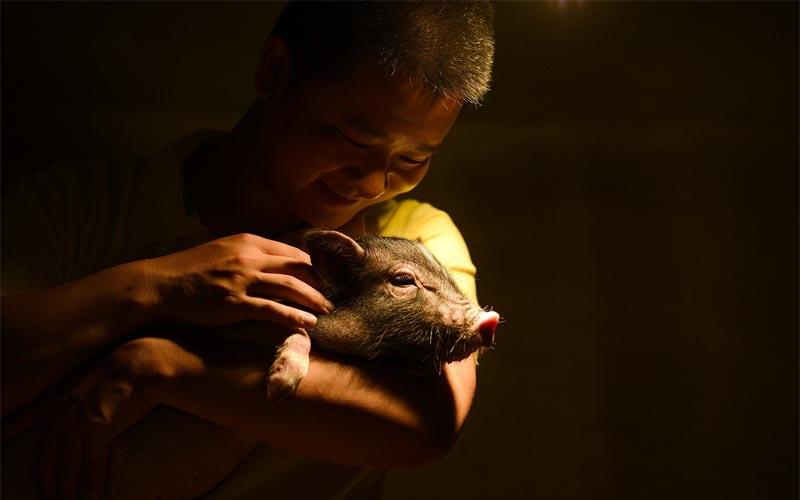 """Nhân Tết Kỷ Hợi ghé thăm """"Hành tinh lợn"""" có một không hai ở Trung Quốc"""