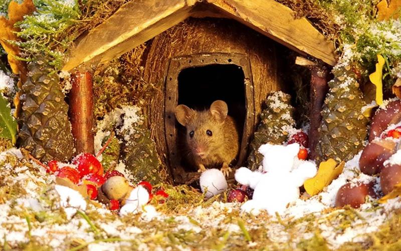 Ngôi nhà cổ tích siêu đáng yêu cho gia đình chuột mùa Giáng sinh