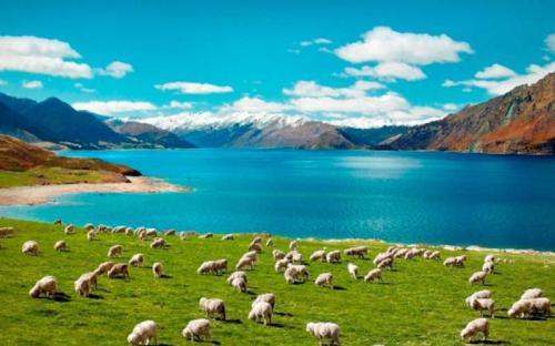 New Zealand nguyên sơ và thanh bình níu chân du khách