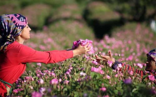 Đến Isparta, đôi tay mình thơm mãi hương hoa hồng