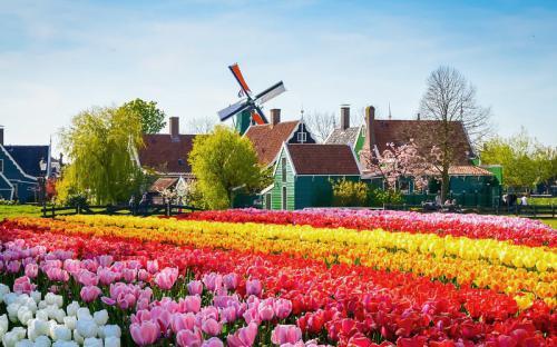 Lạc đến Kinderdijk - xứ sở của cối xay gió