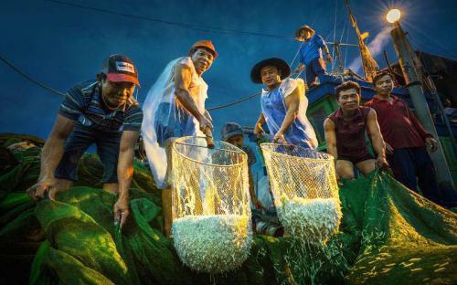 Hành trình săn ảnh mùa cá cơm ở Hòn Yến của nhiếp ảnh gia Trần Bảo Hòa