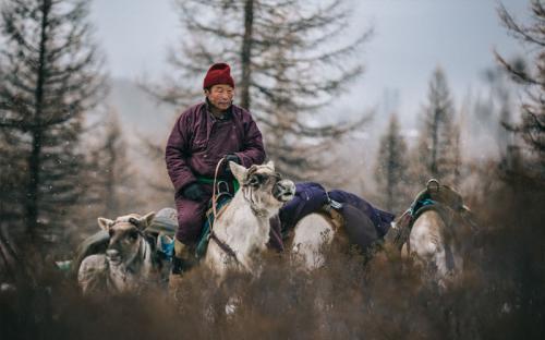 Cuộc sống du mục của bộ lạc chăn tuần lộc Tsaatan