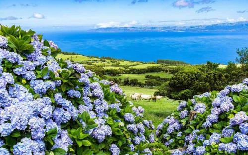 Ngẩn ngơ trước hòn đảo ngập tràn sắc xanh cẩm tú cầu ở Bồ Đào Nha