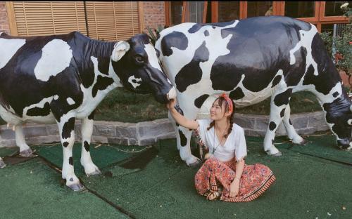 Một ngày làm nông dân ở trang trại Dairy Farm hot nhất Mộc Châu