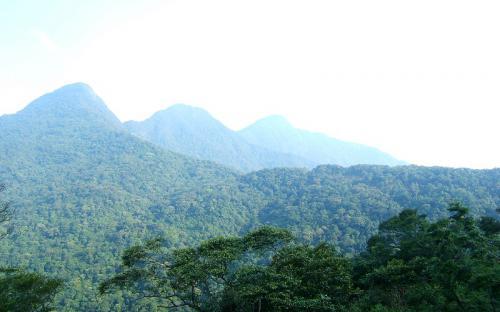 Say trong giấc mộng đại ngàn ở vườn quốc gia Tam Đảo