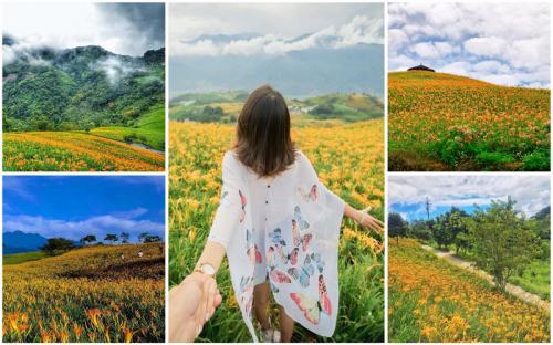 Hóa ra Đài Loan còn có một thiên đường hoa kim châm đẹp ngỡ ngàng đến vậy!