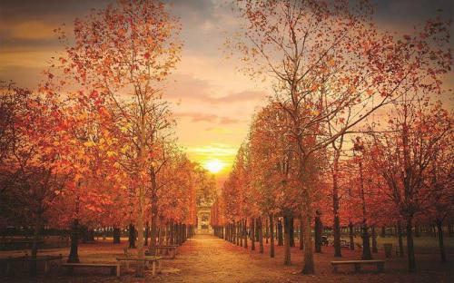 Một Paris rất tình qua những thước ảnh