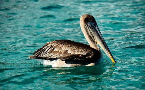 Galapagos, nơi tách biệt thế giới với những sinh vật kỳ dị