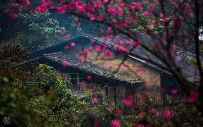 Những điều du khách ngỡ ngàng khi đến đỉnh núi Mẫu Sơn mùa xuân