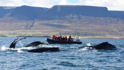 Thành phố Akureyri đầy bất ngờ ở Iceland