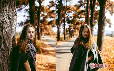"""Săn ảnh """"mùa thu Hàn Quốc"""" tại Biển Hồ chè Gia Lai"""