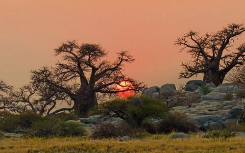 Botswana - thế giới hoang dã đầy hấp dẫn ở châu Phi