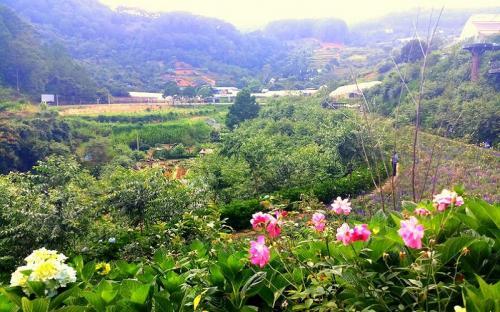 """""""F Cánh đồng hoa"""" - địa điểm uống cafe, ngắm hoa, sống ảo chỉ với 30.000 đồng"""