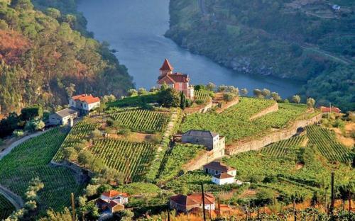 Tham quan cánh đồng nho nổi tiếng ở thung lũng Douro khi tới Châu Âu