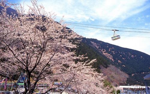 Trải nghiệm cáp treo ngắm núi Tsurumi cao 1.300m ở Nhật Bản