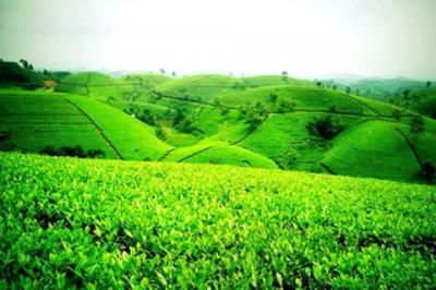 Những điểm đến ấn tượng không thể bỏ qua khi đi du lịch Thái Nguyên