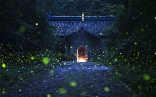 Hàng nghìn con đom đóm lấp lánh thắp sáng đền cổ Linh Cốc