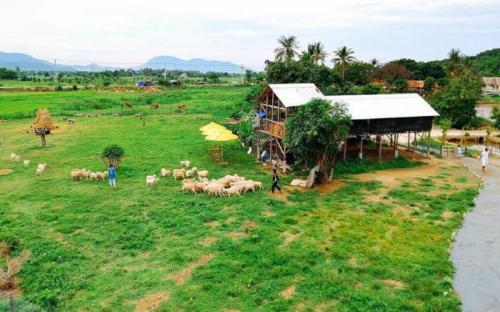 Đồng cừu suối Tiên - điểm check in mới của giới trẻ Khánh Hòa