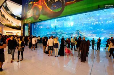 Thông tin về Dubai Aquarium - Thuỷ cung nhân tạo lớn nhất thế giới