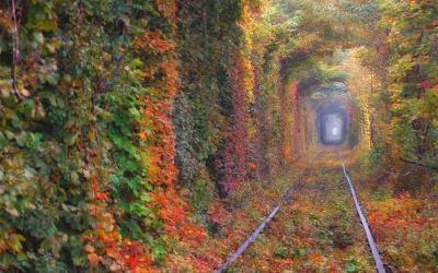 """Độc đáo """"đường hầm tình yêu"""" Ukraine được tạo nên từ những bụi cây"""