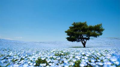 10 địa điểm đẹp miễn bàn ở Nhật Bản (P.2)
