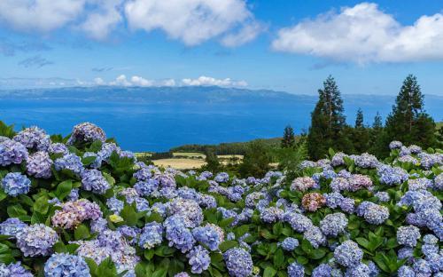 Hòn đảo trồng hoa cẩm tú cầu rực rỡ tại Bồ Đào Nha