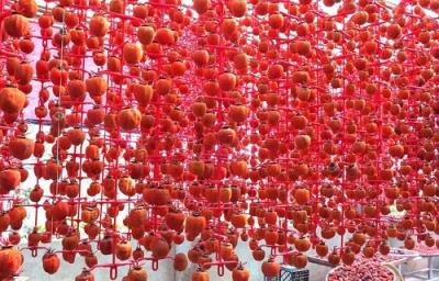 Hồng dẻo treo Đà Lạt - đặc sản độc, lạ xứ sương mù