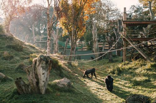 Cùng trẻ vui chơi và cắm trại tại Jersey Zoo