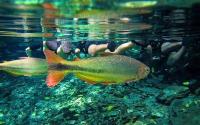 Đắm mình trong những hoạt động tham quan dưới nước ở Bonito