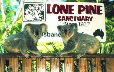 Khu bảo tồn Koala Lone Pine ở Brisbane