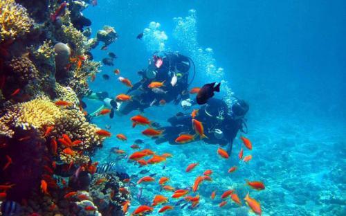 Những điểm lặn nổi tiếng ở Campuchia dành cho những người mới thử lần đầu
