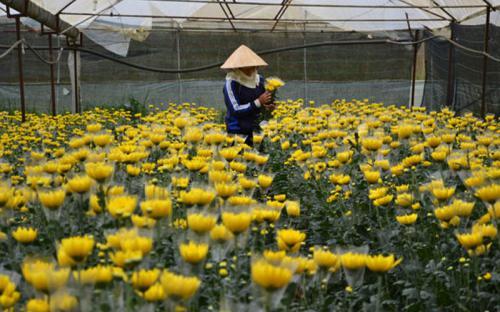 Người Hà Nội lập làng hoa trên cao nguyên