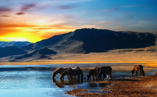 Khám phá Mông Cổ vùng đất của những đồi thảo nguyên