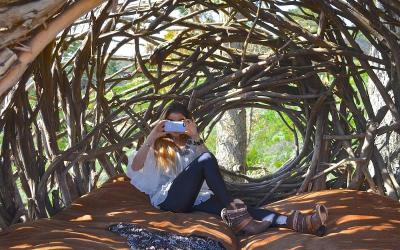 Trải nghiệm thú vị khi ngủ trên tổ chim tại Mỹ