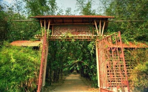 Phú An - Khu bảo tồn tre lớn nhất Việt Nam