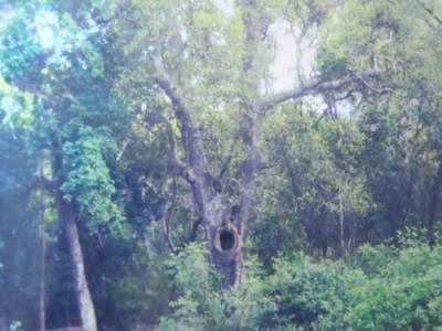 """Về thăm di tích lịch sử """"Rừng cây mang tên Bác"""" ở Quảng Nam"""